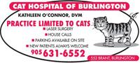 Cat Hospital of Burlington.jpg